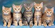 Hayvan Severler PET İZMİR'de buluşacak